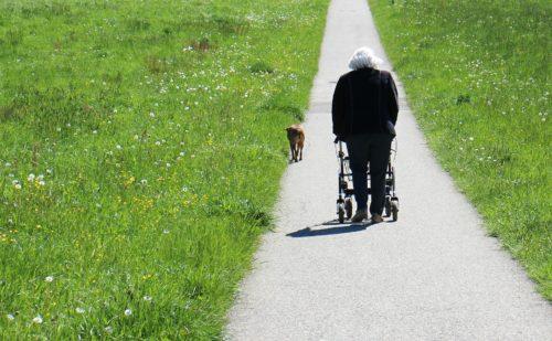 Il fisioterapista e il paziente anziano: prevenzione, riabilitazione, educazione e continuità