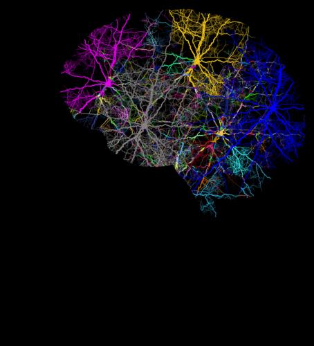 Nutrizione e invecchiamento cerebrale